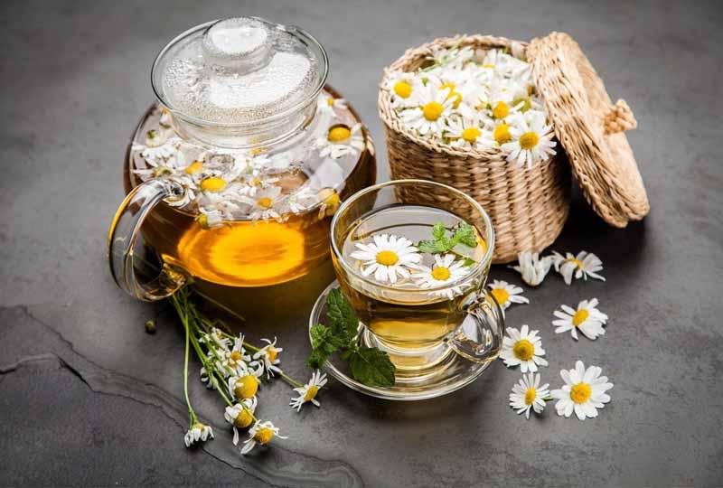 Sử dụng hoa cúc chữa trị bệnh viêm nha chu