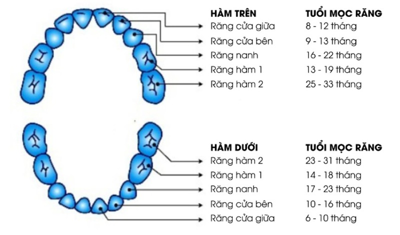 Quá trình mọc răng sữa thông thường của trẻ